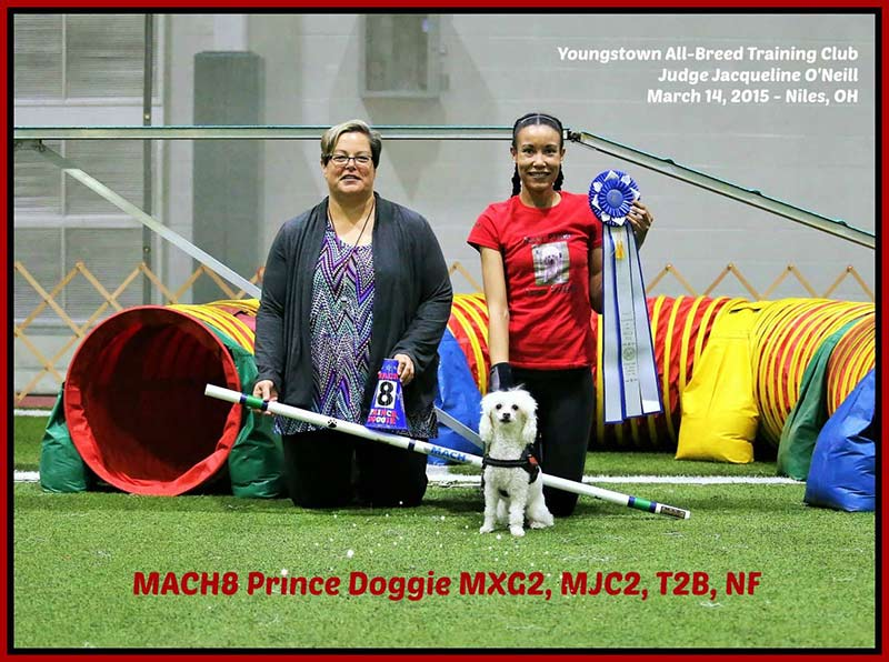 akc canine partners