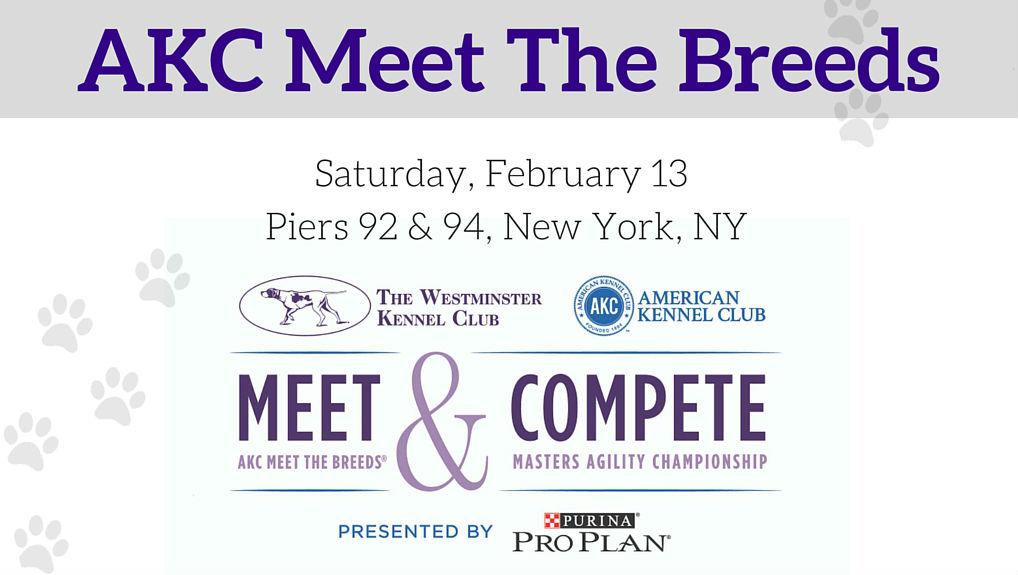AKC Meet the Breeds promo