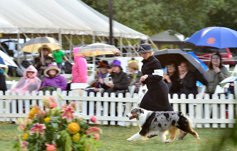 Morris & Essex Kennel Club Dog Show 2015: Photo Gallery (Part One)