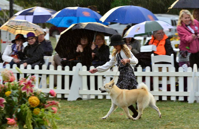Morris & Essex Kennel Club Dog Show 2015: Photo Gallery (Part Three)