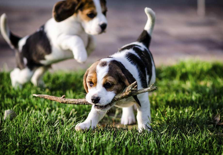 Best Grass For Dogs In Texas