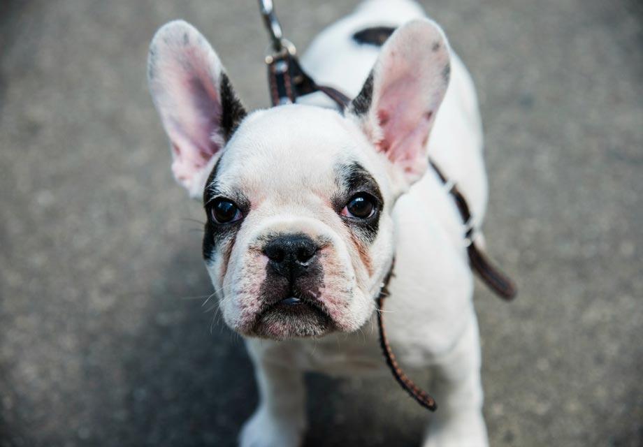 Dog Rescues In Omaha Ne