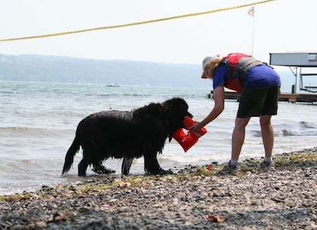 newfoundland lifesaving20