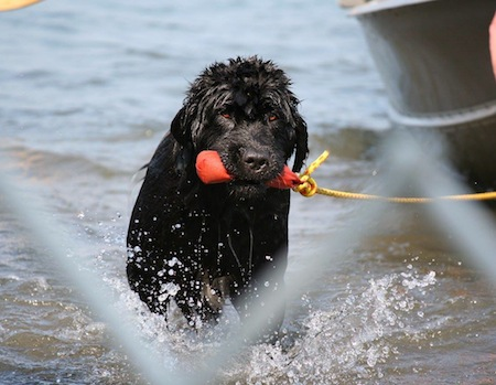 newfoundland lifesaving