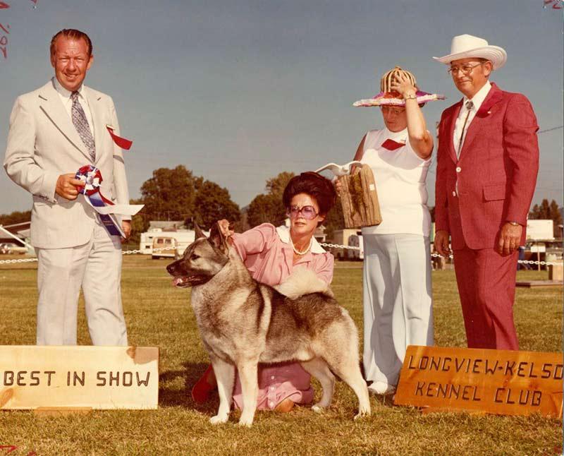 Norwegian Elkhound His...