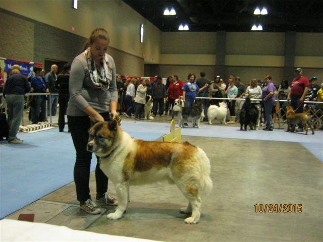 Pet Expo 8