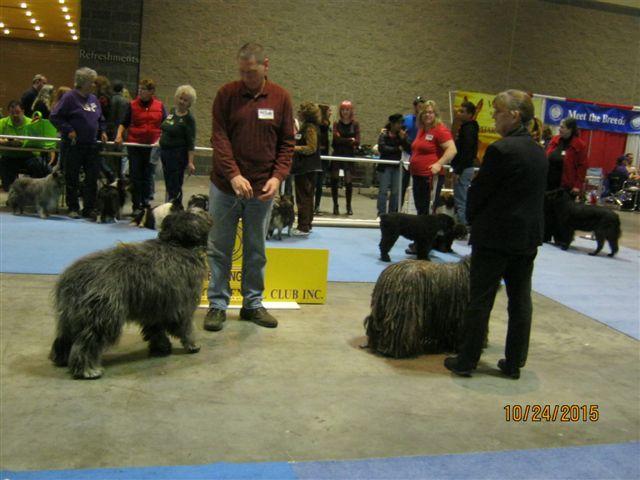 Pet Expo 9