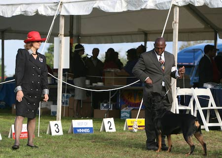 Rottweiler Morris and Essex