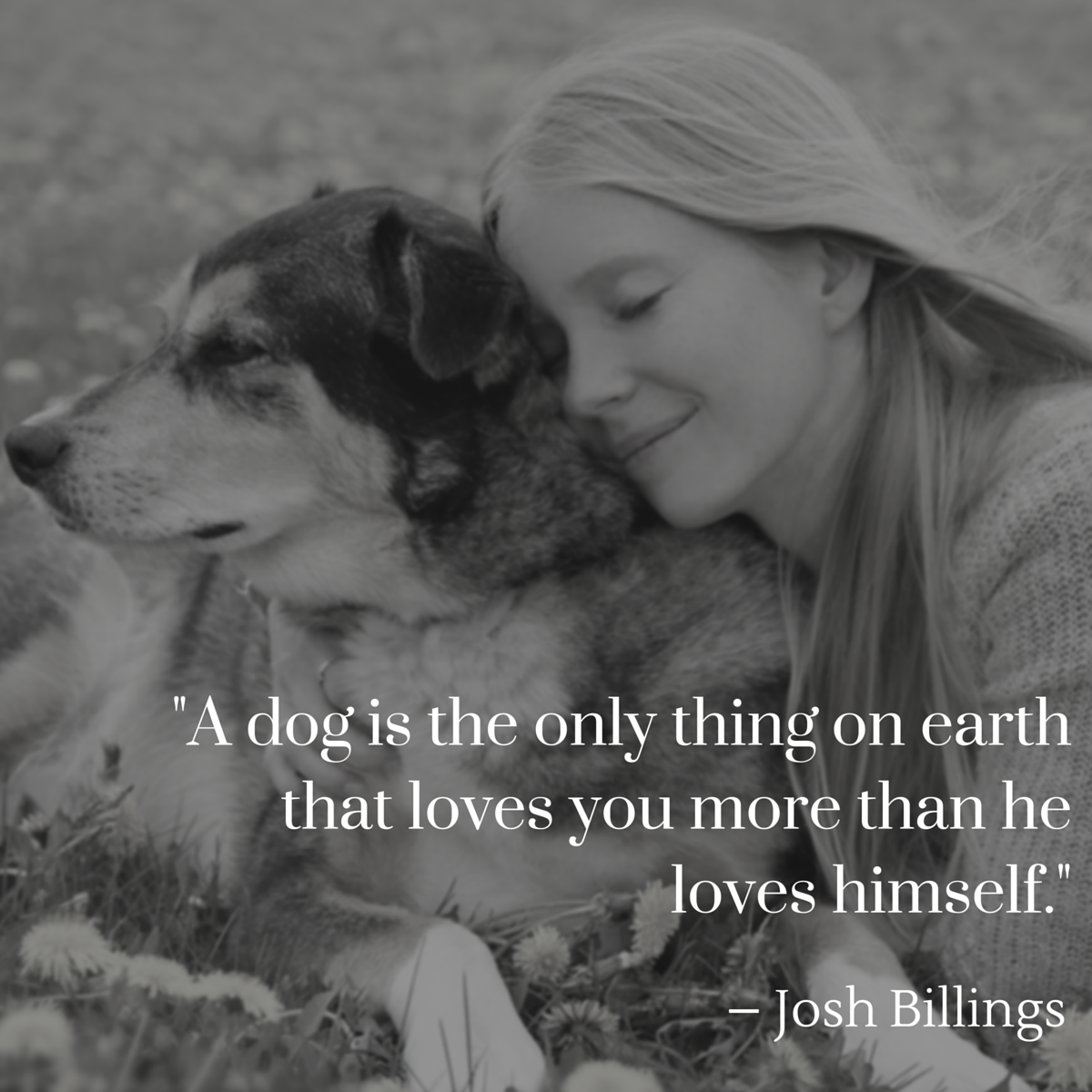 Quotes About Dog Friendship Best Dog Quotes  The Ultimate List  American Kennel Club