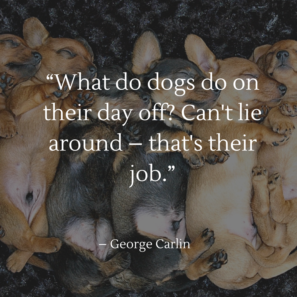 Dog Quote Carlin. U201c