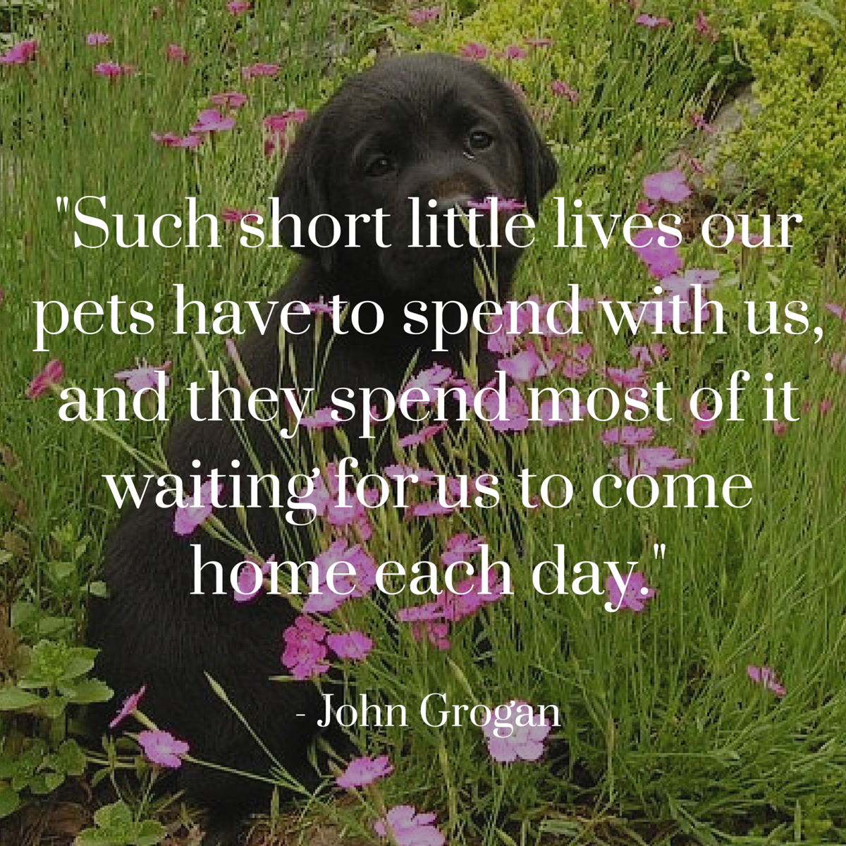 Dog Quotes We Rounded Up The Best Of