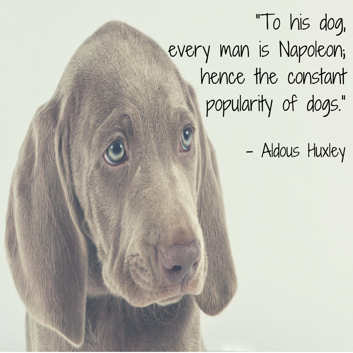 dog quote huxley