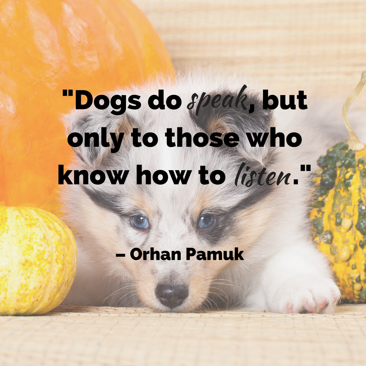 Dog Quotes - The Ultimate List - American Kennel Club