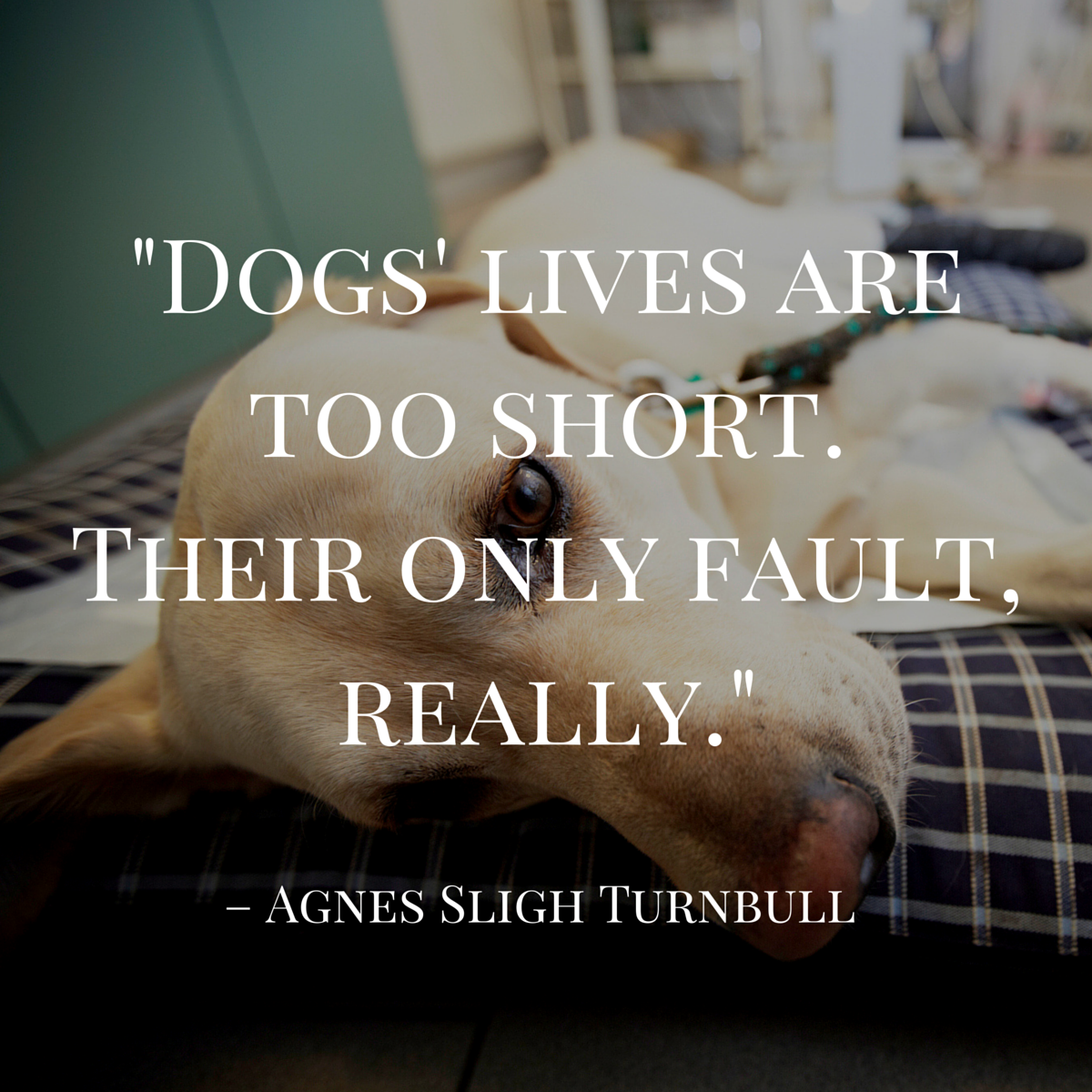 dog quote by turnbull