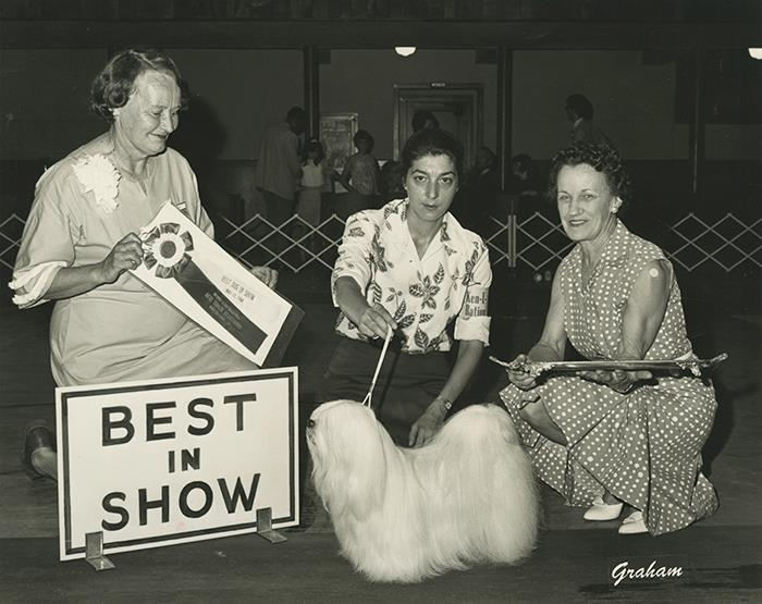 Frosty, a winning show dog in the late 60s.
