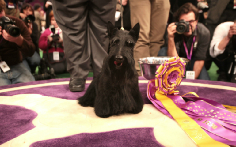 Champion Bloodlines: Meet The Breeders Of Westminster Winners
