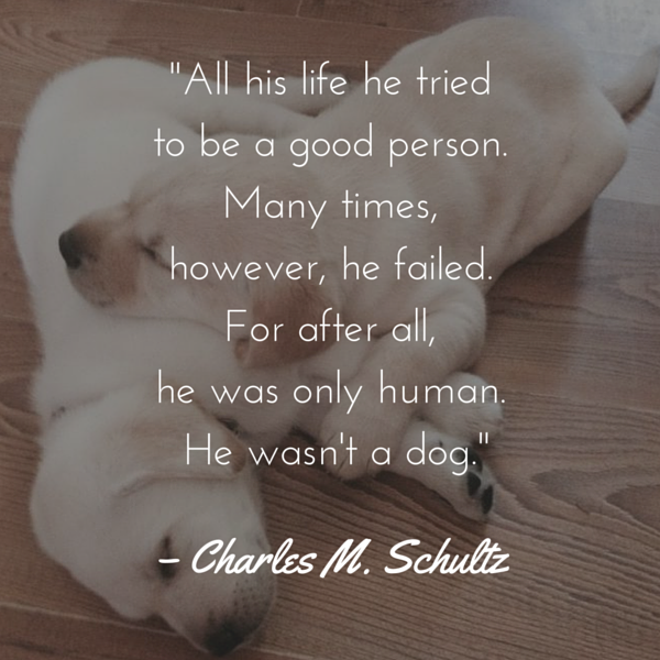 Dog Quotes We Rounded Up The Best Of The Best Amazing Quotes About Dog Friendship
