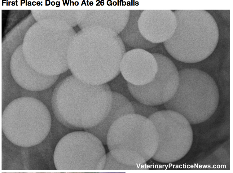 They Look Like Ordinary Dogs But Wait Till You See What Their Doctors Found
