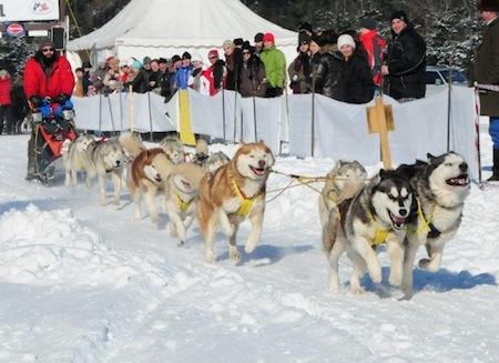 Siberian Races