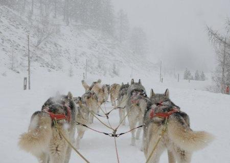 Siberian Rescue