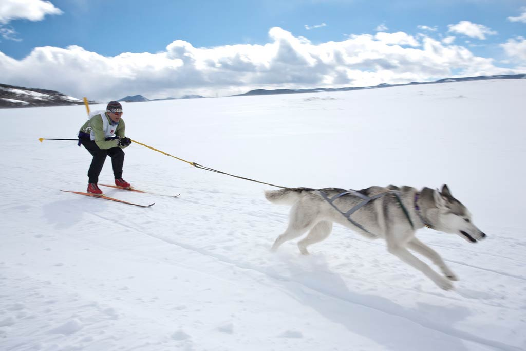 Skijoring with Northern Breeds