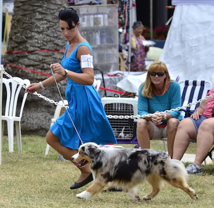 Dog Lovers Summerfest 1