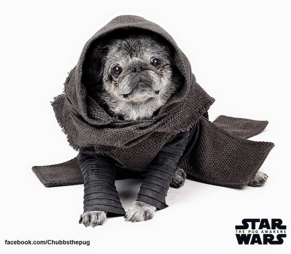 The Pug Awakens