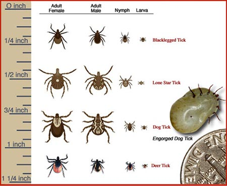 What Natural Insecticide Is Best For Ticks And Lice