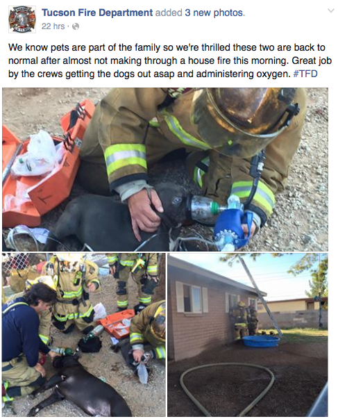 Tucson Firefighters Facebook Page Saved Dying Dogs Lives