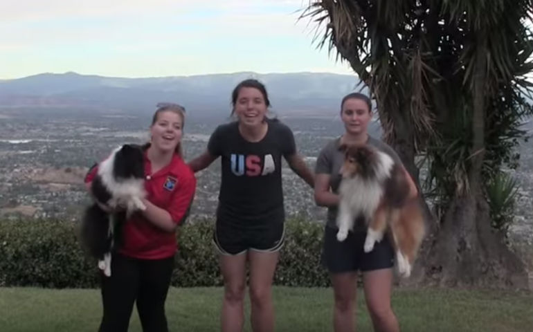 Watch The AKC/USA Agility World Team's Fun Take on `Shake It Off'