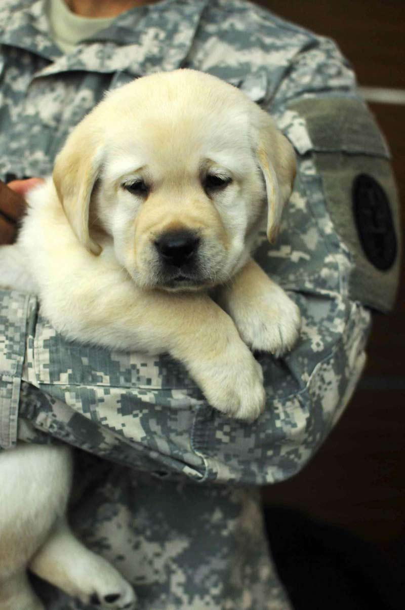 Walter Reed Puppy