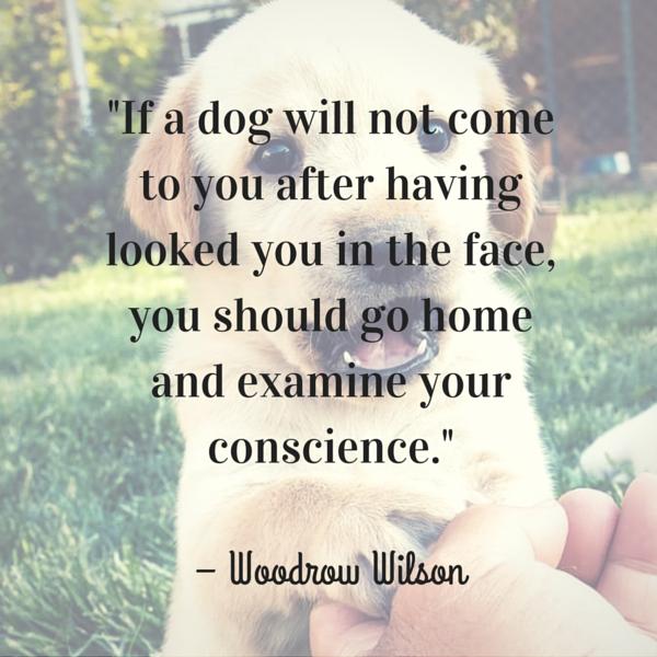 Wilson Dog Quote