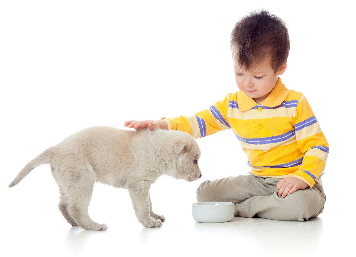 how to raise a puppy you can live with ebook