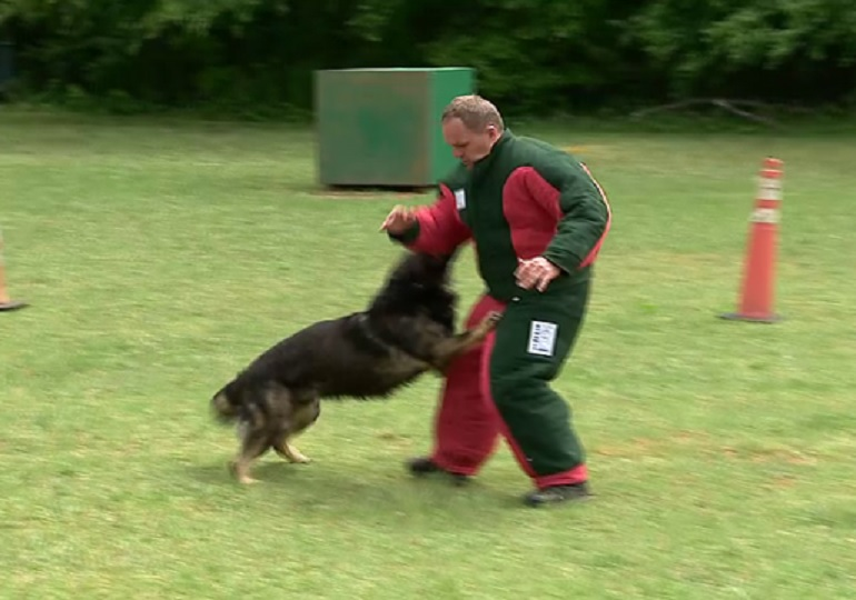 Charlotte Dog Training Club Donates Bite Suit to Local K9 Unit