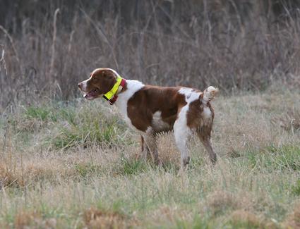 早期的小狗训练是一个重要的基础
