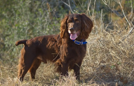 9 Beautiful Dog Breeds You Didn T Know Existed World Of