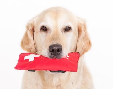 与狗一起露营:与您的小狗一起享受户外活动的秘诀