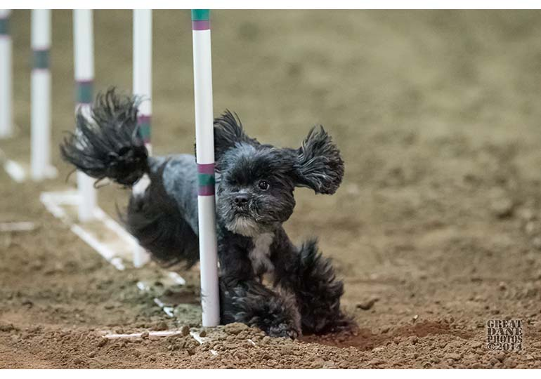 Congratulations To Winners At The Akc Agility Invitational Akc