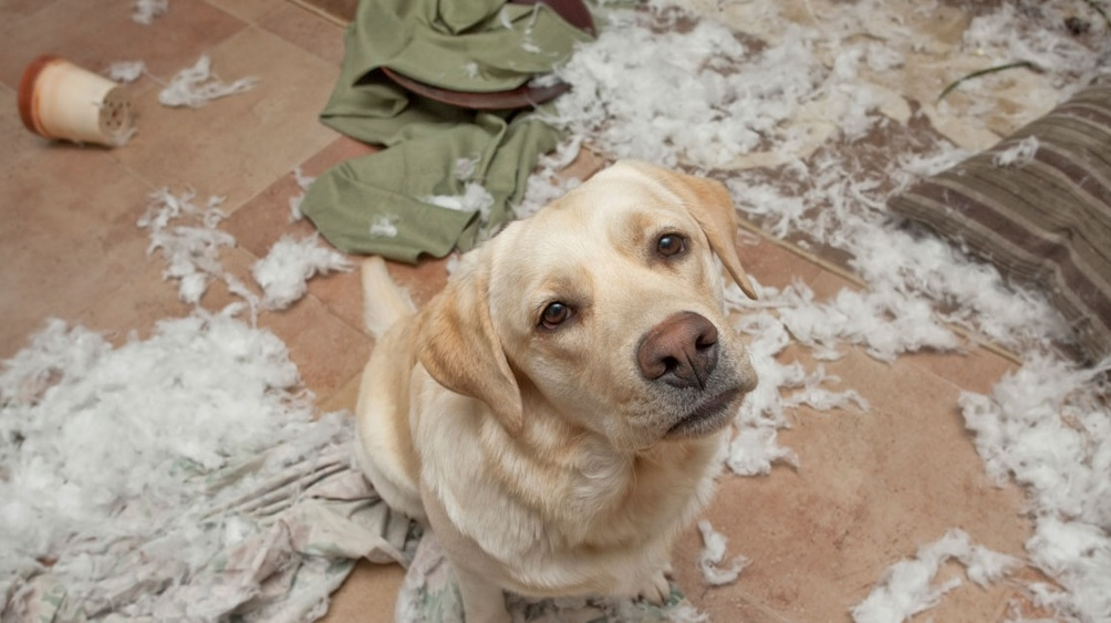 5 Things You're Doing To Make Your Dog Misbehave ...