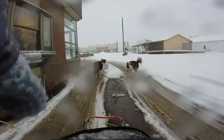 [VIDEO] Canadian Woman Dog Sleds to Tim Hortons