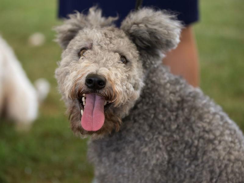 Westminster Dog Show History