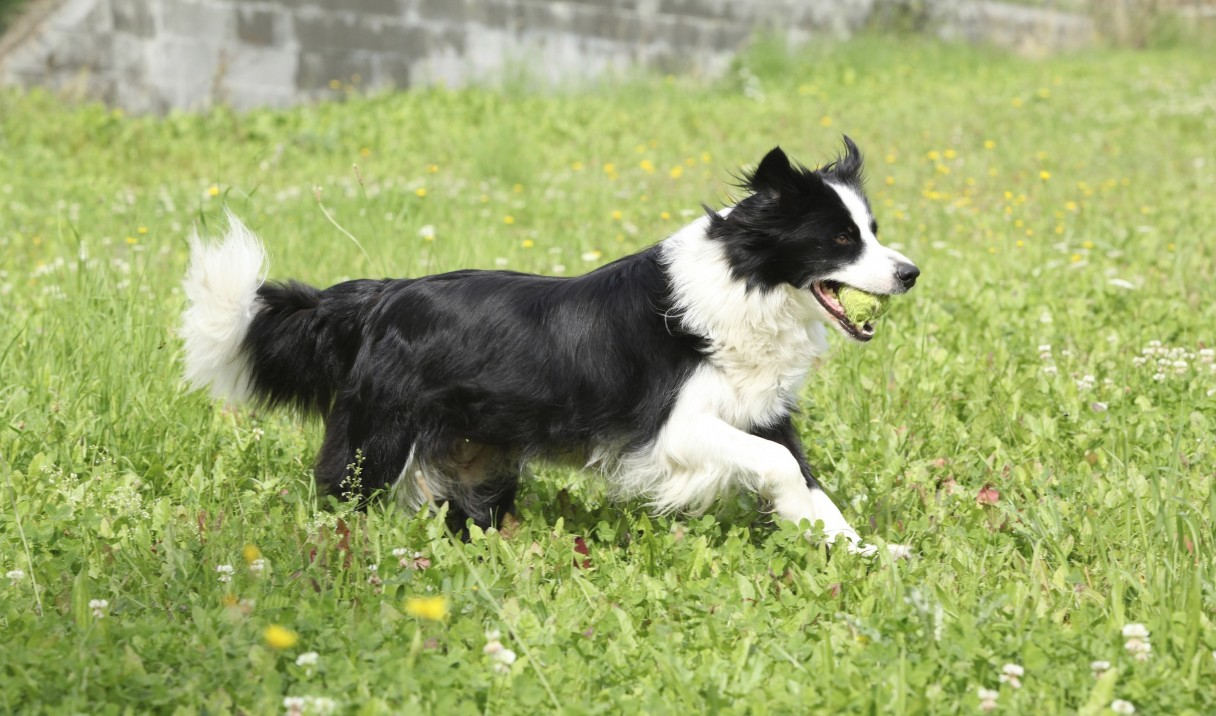 Does AKC record deaths of dogs?