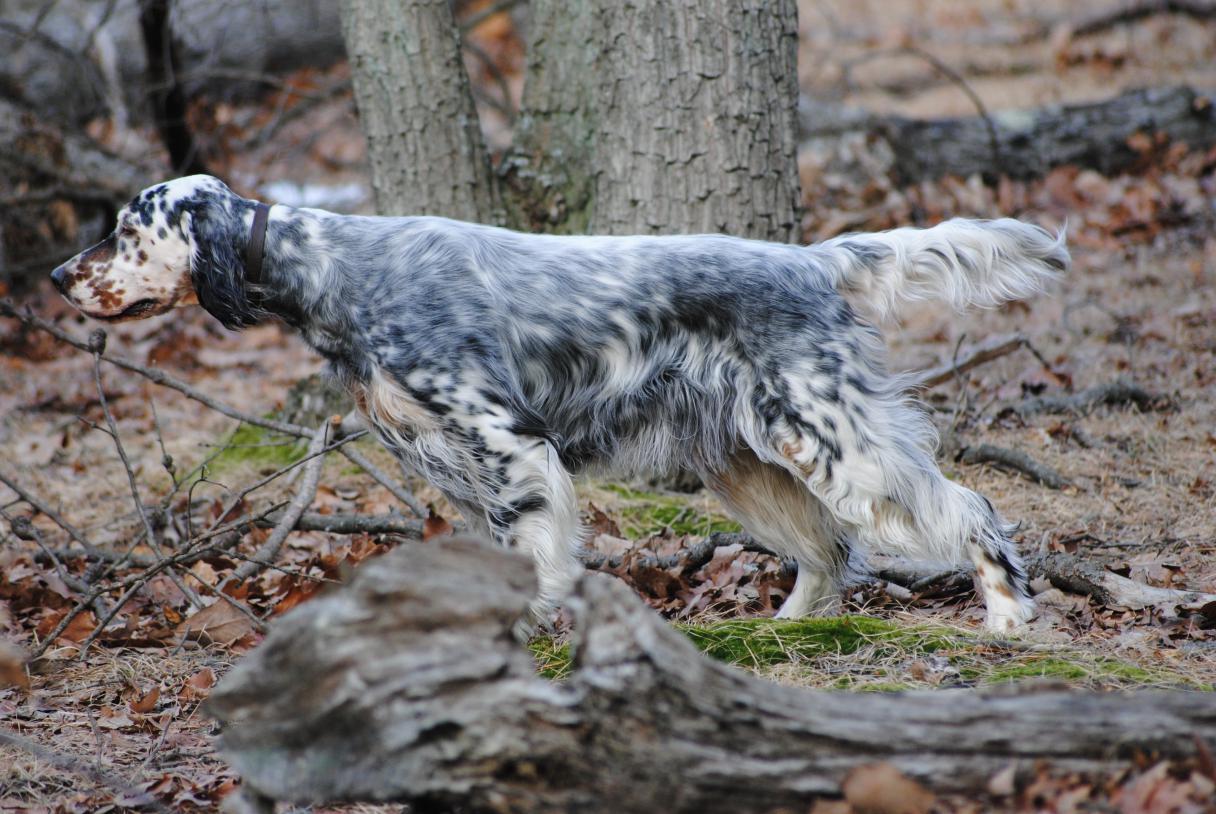 Setters Dog Kennel
