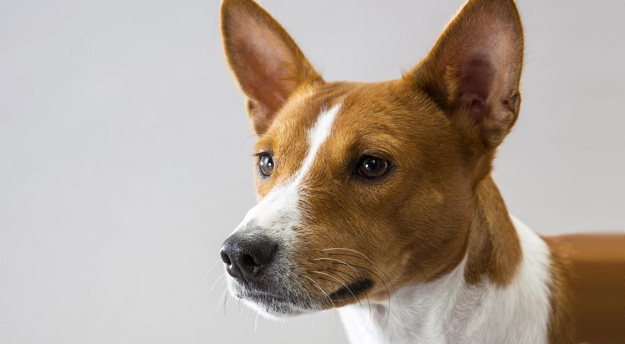 Buy Dog Kennel Club Breeder