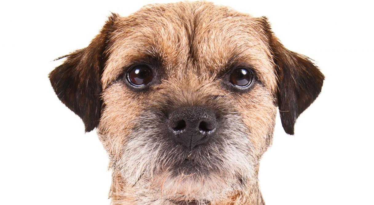 Show Me Your Dog Calendar