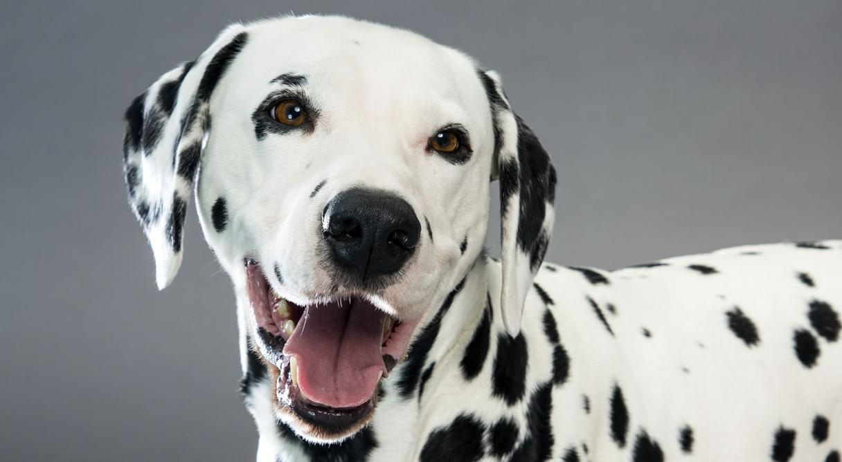 Dogs Names With Spots