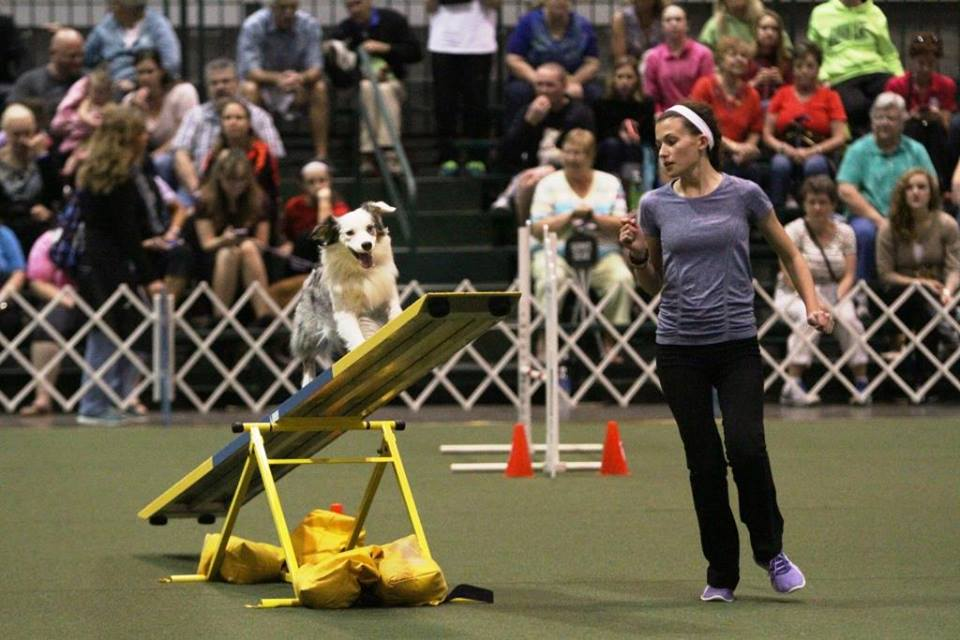 2015 AKC Junior Agility Competition