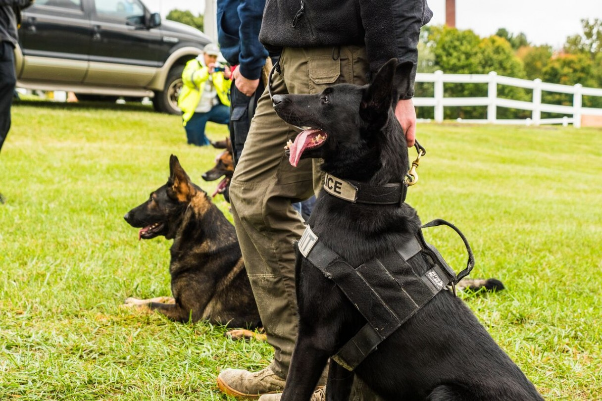 Newtown Kennel Club Hosts the 2015 Western CT Police K-9 Challenge