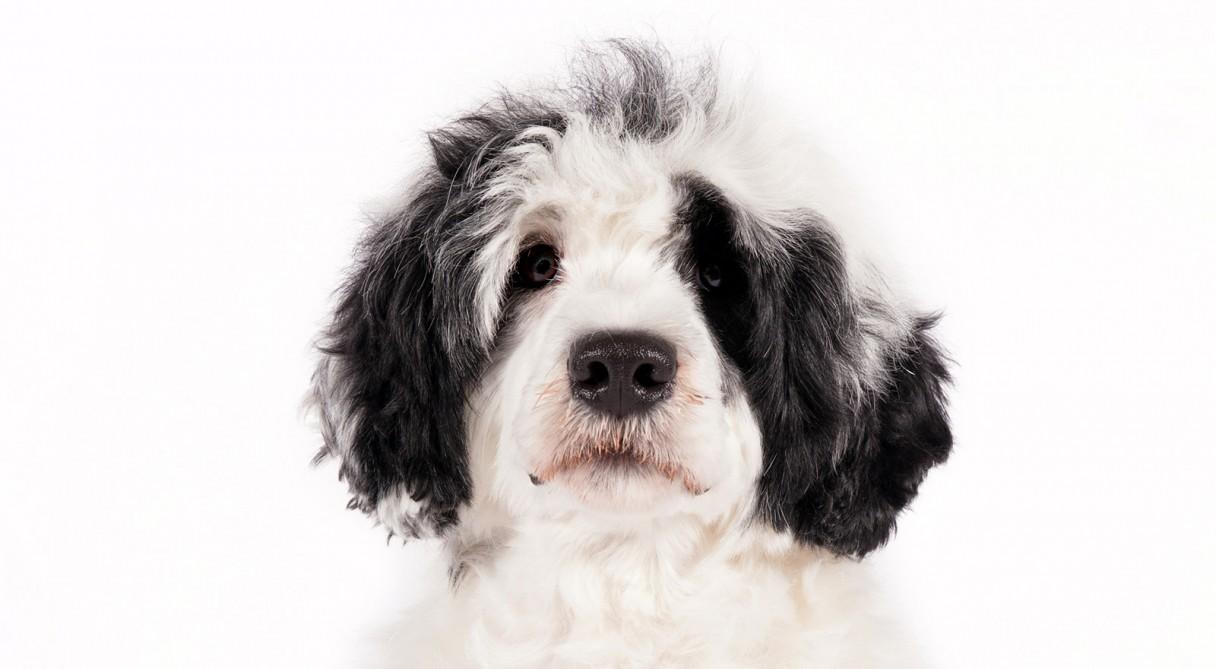 Dog Rescue Directory Kennel Club