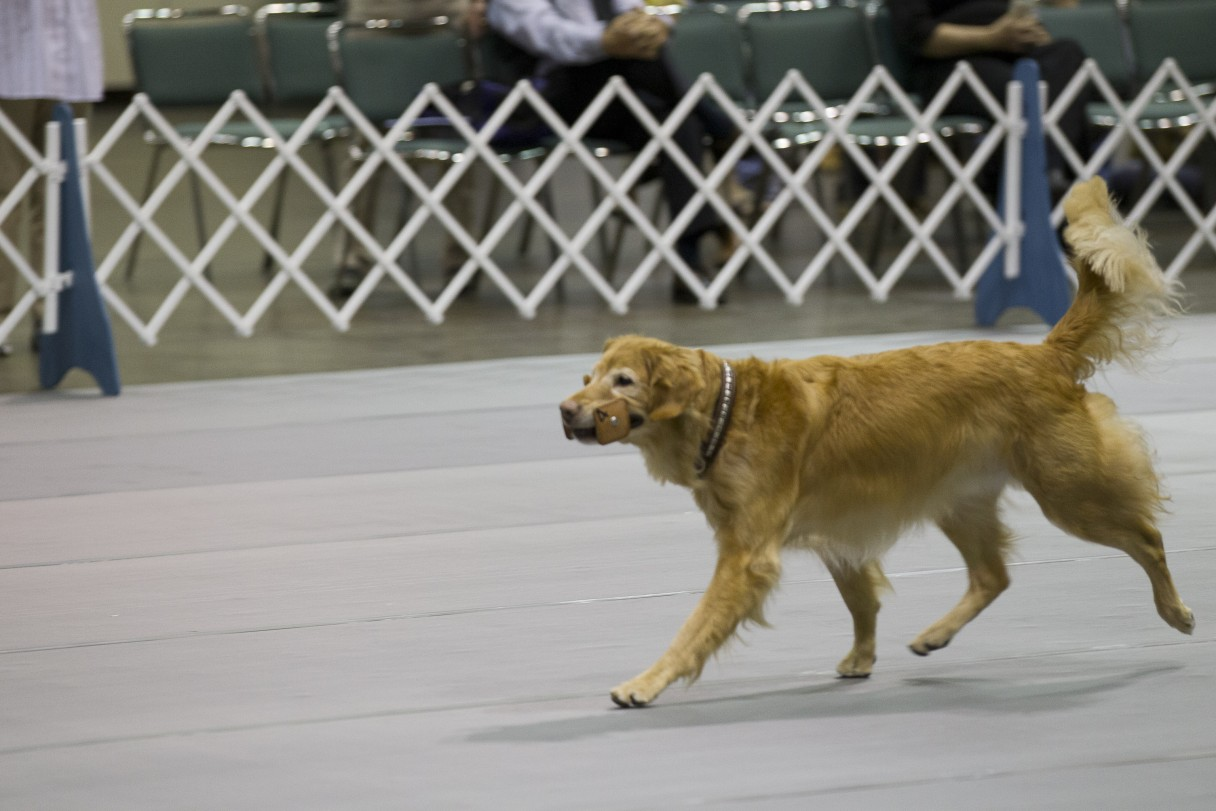 AKC National Obedience Championship Comes to Tulsa